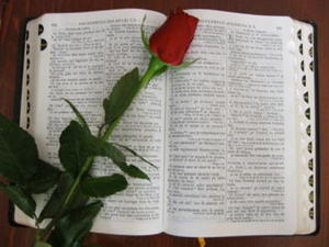 A Bible with a rose